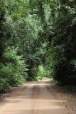 路在森林里 库存照片