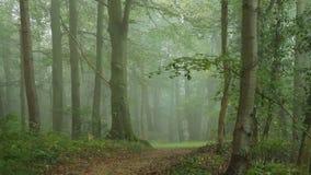 路在森林里 股票视频