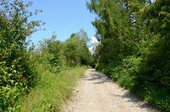 路在森林里 库存图片