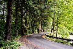 路在森林里 免版税库存照片