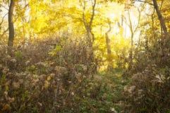 路在森林里 免版税库存图片
