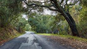 路在森林,加利福尼亚,美国里 免版税库存照片