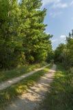 路在森林 库存照片