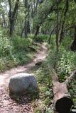 路在森林 免版税库存照片