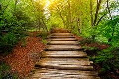 路在森林Plitvice湖,克罗地亚 免版税库存照片
