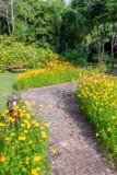 路在波斯菊庭院里 库存图片