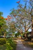 路在海滩的绿色公园 库存图片