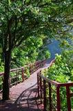 路在海滩的绿色森林里 库存图片