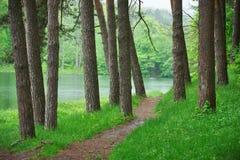 路在湖附近的绿色森林,风景的自然里 库存照片
