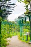 路在热带庭院里 库存图片