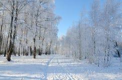 路在用树冰盖的美丽如画的冬天森林里 图库摄影