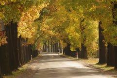路在秋天。 库存照片