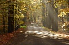 路在秋天。 免版税库存照片