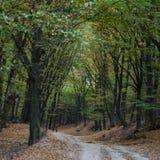 路在秋天期间的森林里 图库摄影