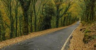 路在秋天森林里 免版税图库摄影