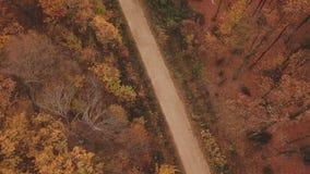 路在秋天森林里 股票录像