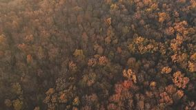 路在秋天森林里 股票视频