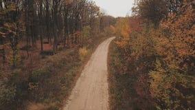 路在秋天森林里 影视素材