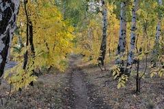 路在秋天森林里 免版税库存图片