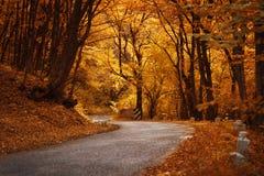 路在秋天森林里 库存照片