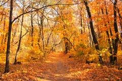 路在秋天森林里 免版税库存照片