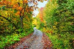 道路在五颜六色的秋天森林里 库存图片