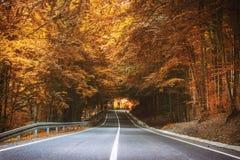 路在秋天 库存照片