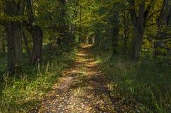 路在秋季公园 库存照片
