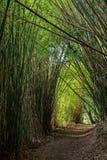 路在竹森林里 库存照片