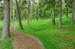 路在绿色森林,风景的自然里 免版税库存照片