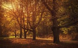 路在美丽的秋天森林里 库存图片