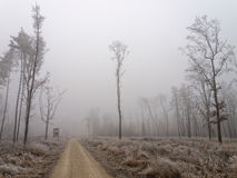 路在荒凉的森林里结霜的天 免版税图库摄影