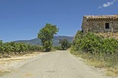 路在葡萄园,普罗旺斯里。法国。 免版税图库摄影