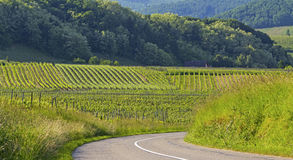 路在葡萄园,阿尔萨斯村庄里。法国。 图库摄影