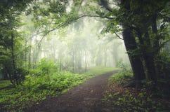 路在被迷惑的有薄雾的森林里 免版税库存图片