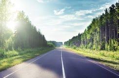 路在晴朗的森林里 免版税库存照片
