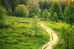 路在绿色森林波兰Bieszczady里 库存照片