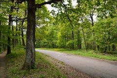 路在绿色森林里 免版税库存照片