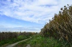 路在Vacaresti自然公园,布加勒斯特,罗马尼亚草甸  库存照片