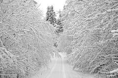 路多雪的结构树 免版税图库摄影