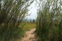 路对草甸打开 图库摄影