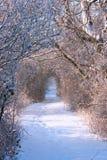 路径冬天 库存照片