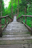 路径到前面森林里 免版税图库摄影