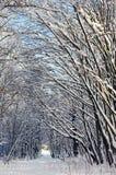 路径在冬天森林里 免版税库存图片