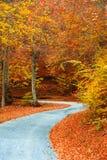 路径在有划分为的叶子的森林里 免版税图库摄影