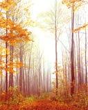 路径在有雾的秋天森林。 免版税库存照片