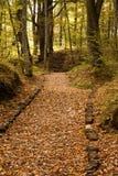 路径在森林或森林里 库存照片