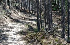路径在森林里 免版税库存照片