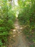 路径在森林里 库存图片