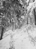 路径在森林里 库存照片